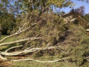 Fallen tree in need of removal in Jacksonville, FL