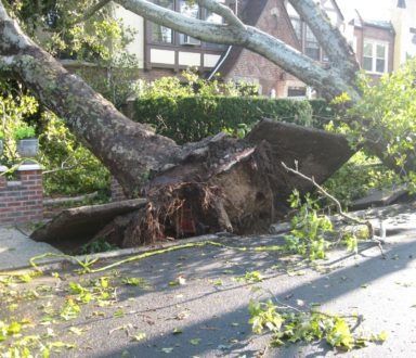 Tree s on sidewalk uprooted by storm