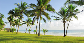palm trees and grass at the beach