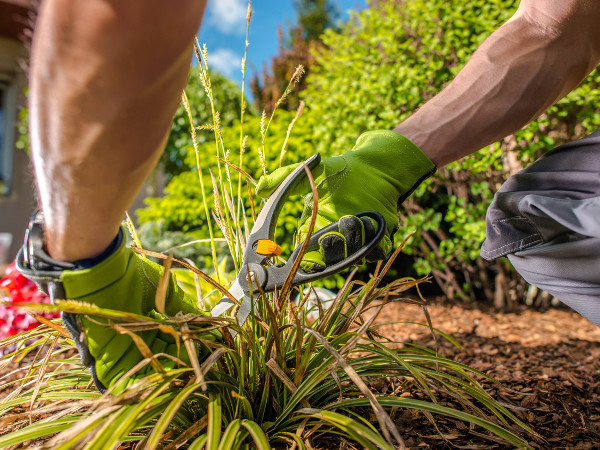 A person removing weeds with garden tools