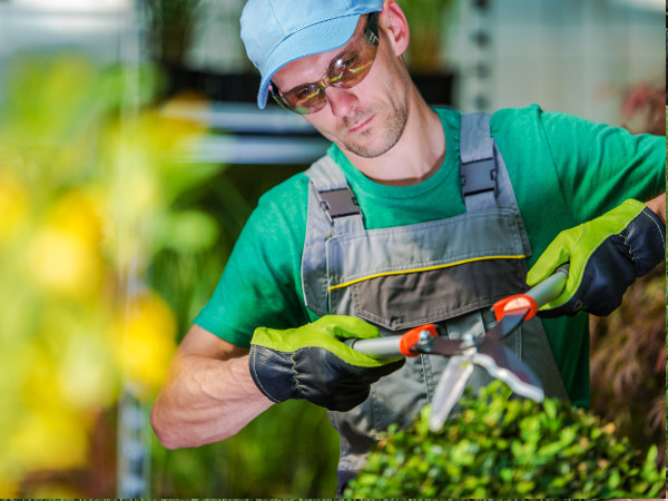 Pyramid lawn Service employee trimming a shrub