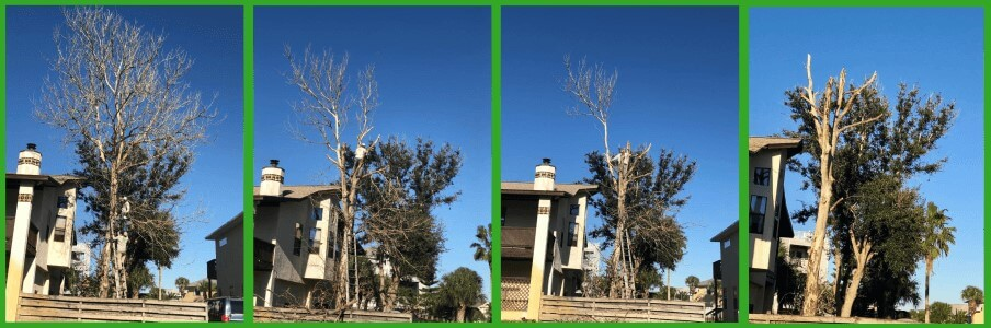 Tree removal in St. Augustine